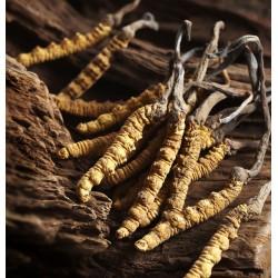 Cordyceps Forte vegan 100 kapsúl